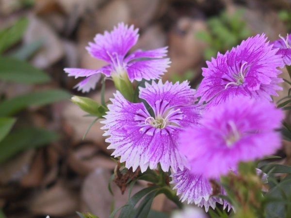 Plantas que florecen todo el a o - Plantas exterior todo el ano ...